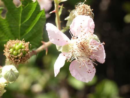 Flower2007071310