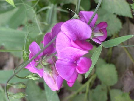 Flower2007071313
