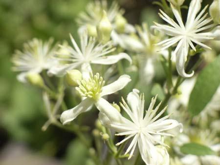 Flower2007071315