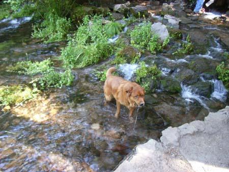 Sacramentoriverheadwaters2007071106