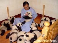 Panda2005120801